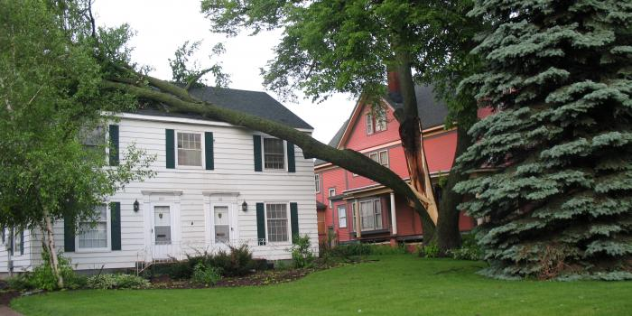 Damaged House From Fallen Tree